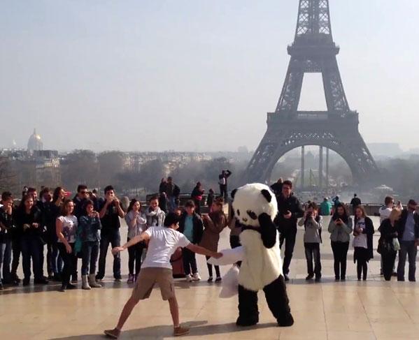 iim crazy panda - Buzzies Award 2014 - Un panda fou à paris ! Projet vainqueur de la catégorie Manager de la communication numérique