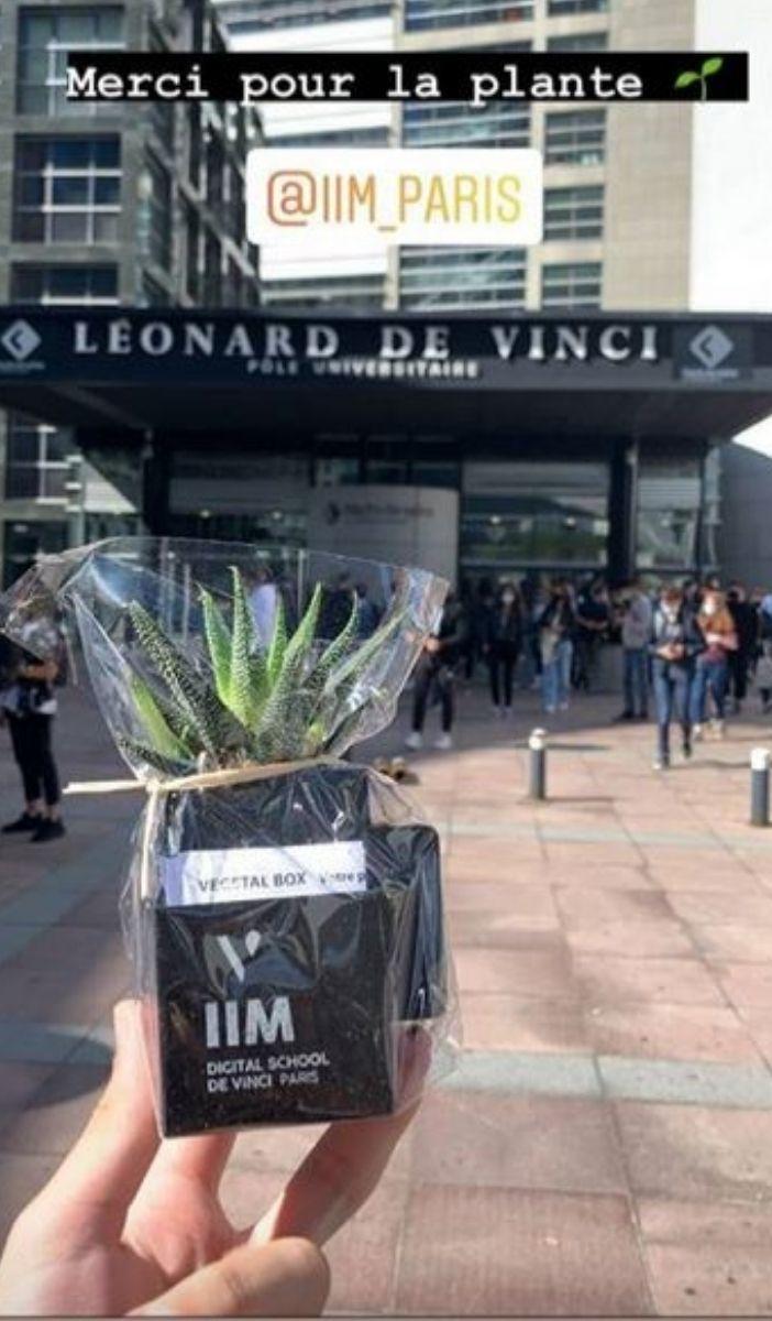 graine de vinci story 4 - Graine de Vinci, la plante dépolluante qui grandit avec les étudiants du Pôle Léonard de Vinci